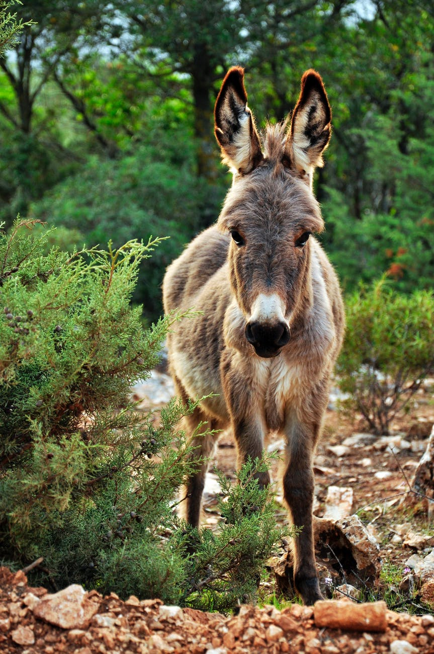animal cute donkey nature