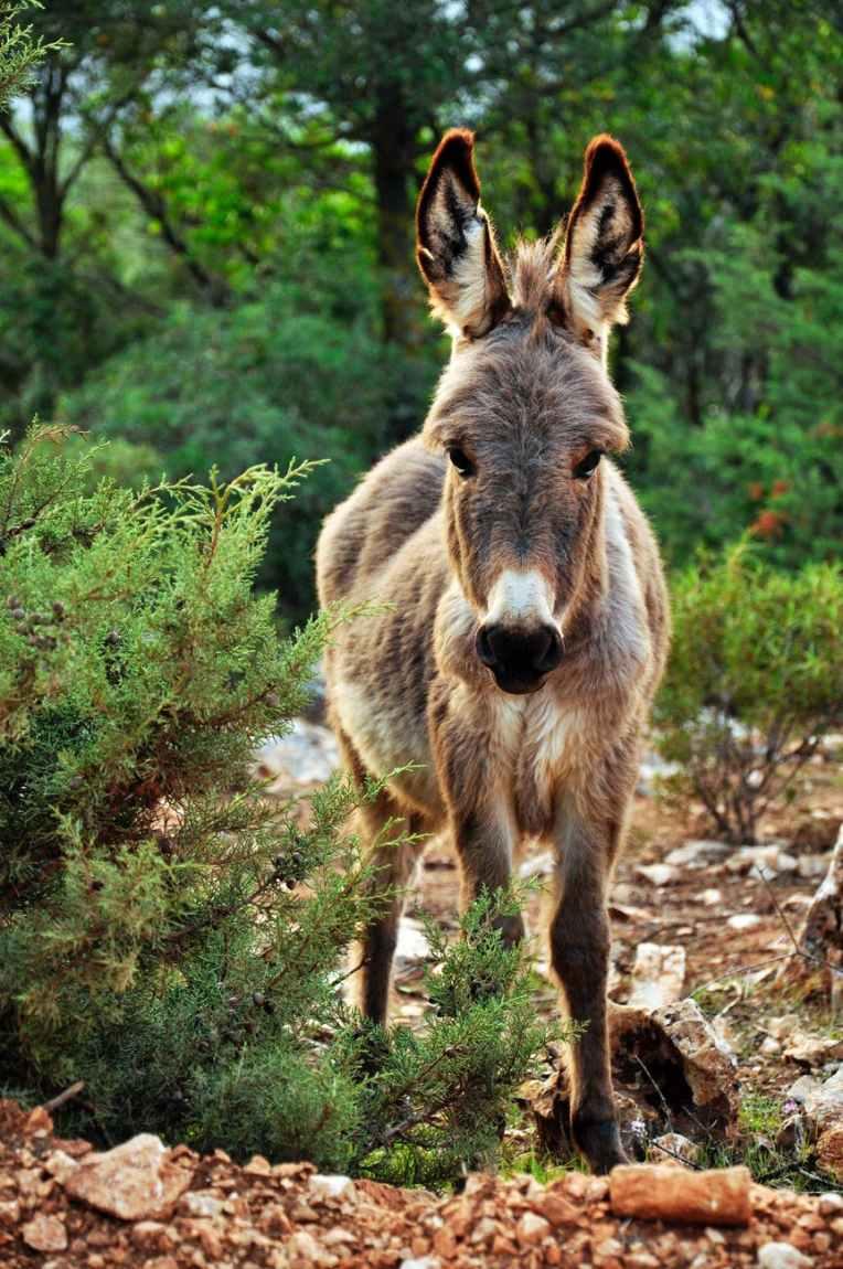animal cute donkey nature